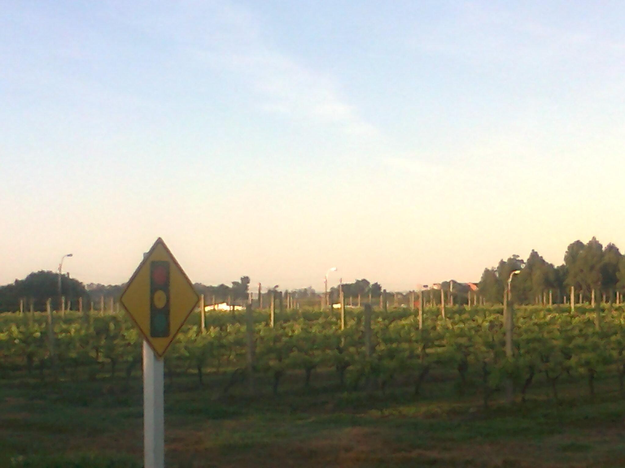 5 nuestras viñas, luz roja para la producción